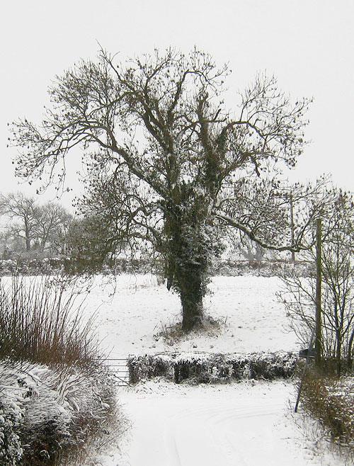 Ash tree with keys