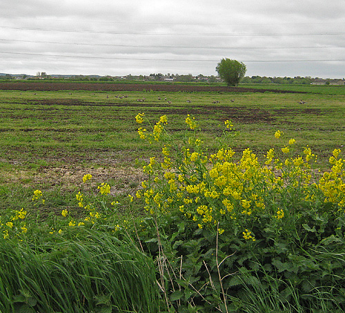 The Somerset Levels near Westhay reserve
