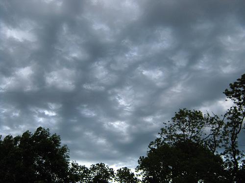 webbed sky