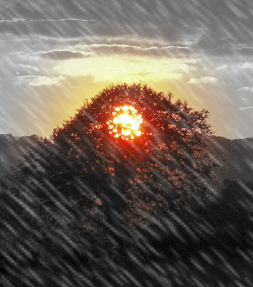 Sun In Tree With Rain