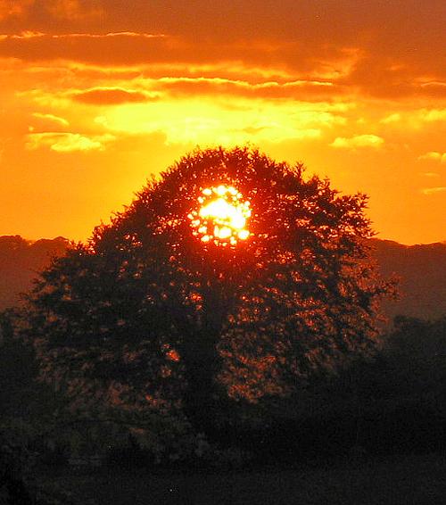 sun-in-tree