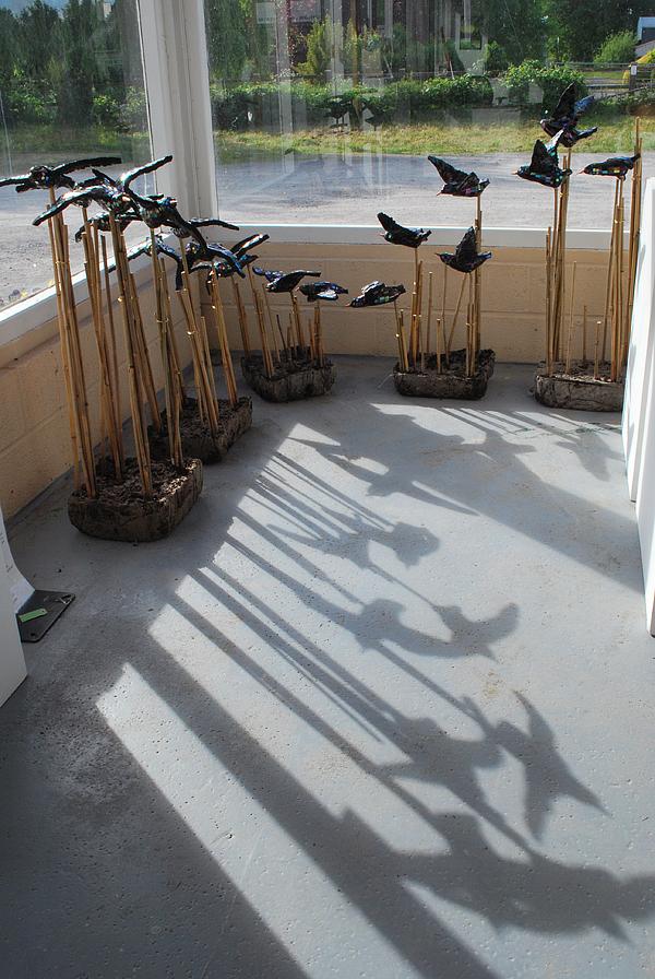 starlings in gallery