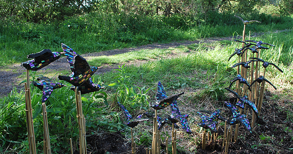 starlings9