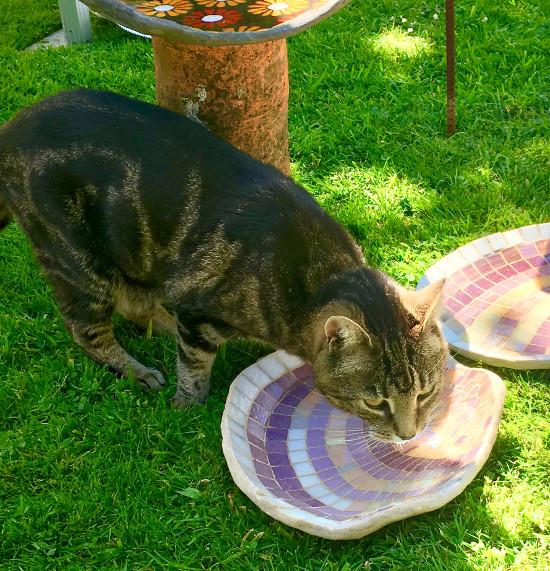 Maisie the cat and shell birdbath