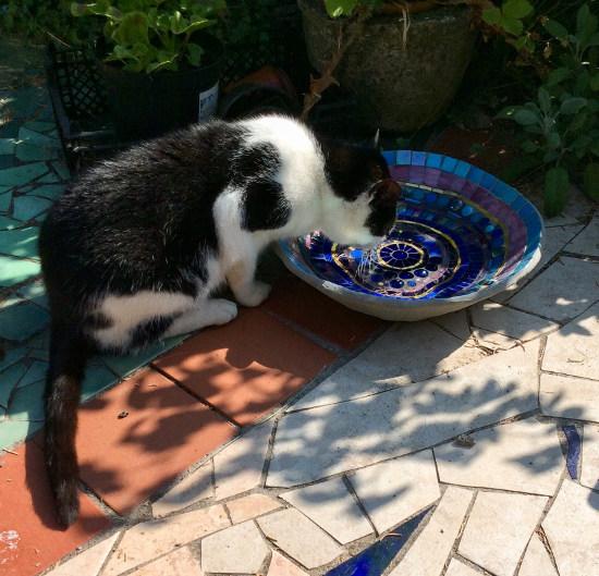 Pushkin cat at Blue Turtle bird bath